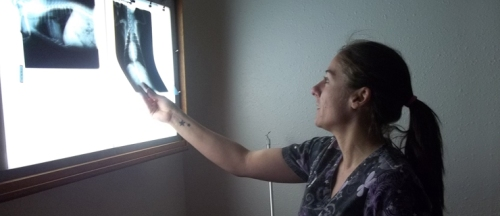 SPC alumna Nicole Becker looks over X-rays from one of her four-legged patients while working as lead veterinary technician and office manager at North Boulder Companion Animal Hospital in Boulder, Colo.